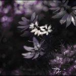 senne_kwiatylipiec